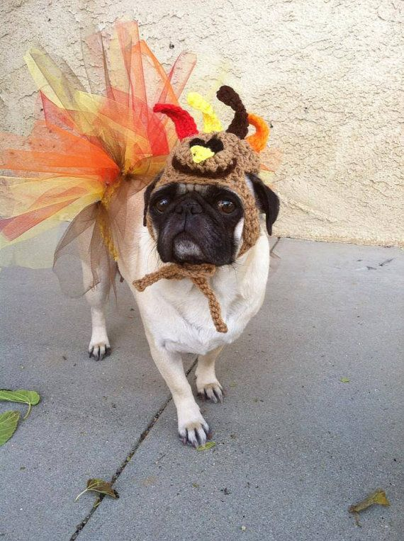 Thanksgiving Turkey Hat Tutu Set Thanksgiving Pugs Cute Dog