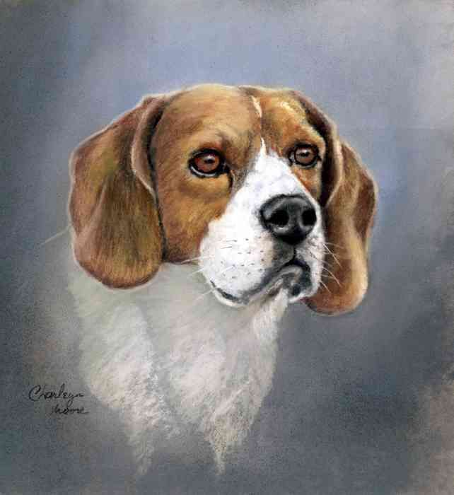 Beagle Dog Drawing Original Animal Art By Charleyn Moore