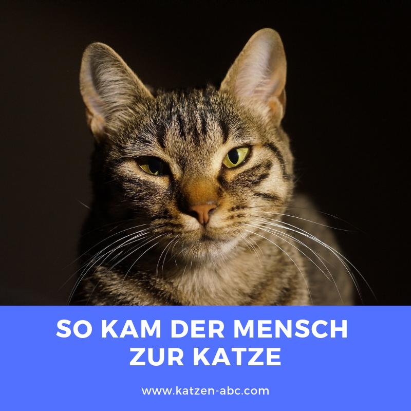 So Kam Der Mensch Zur Katze Katzen Namen Katzennamen Katzen