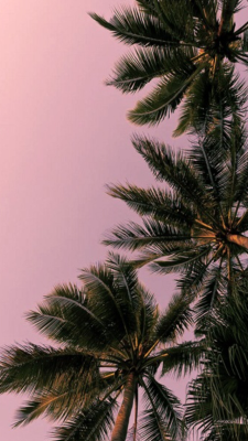 Aesthetic Palm Tree Wallpaper Pink