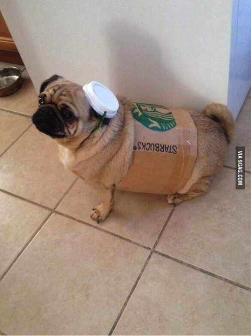 Starbucks Dog Costume Cute Pugs Funny Animals Dog Puns