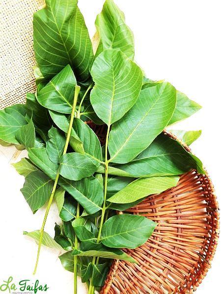 varicoză și frunze de nuci)