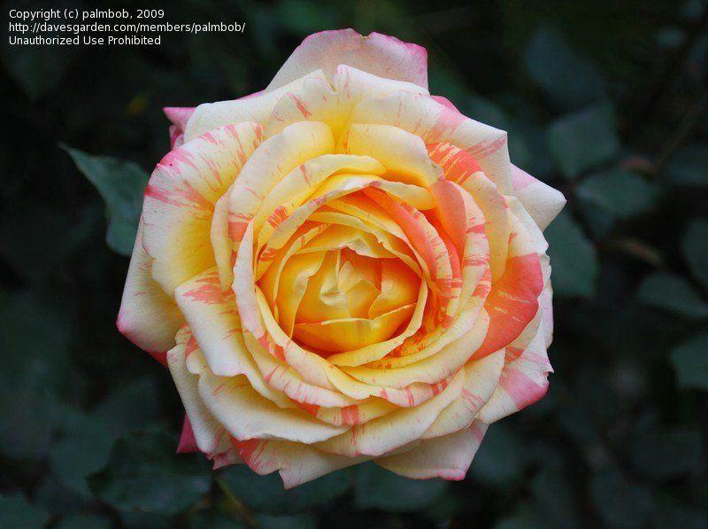 flower in my garden in springtime
