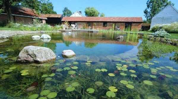 The Biotop Natural Pools In 2020 Natural Swimming Ponds Natural
