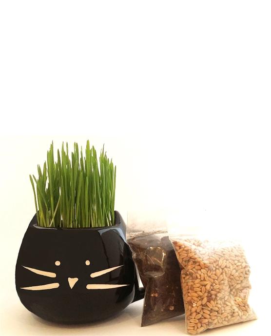 100 Organic pet grass kit Pet grass, Cat grass, Grass