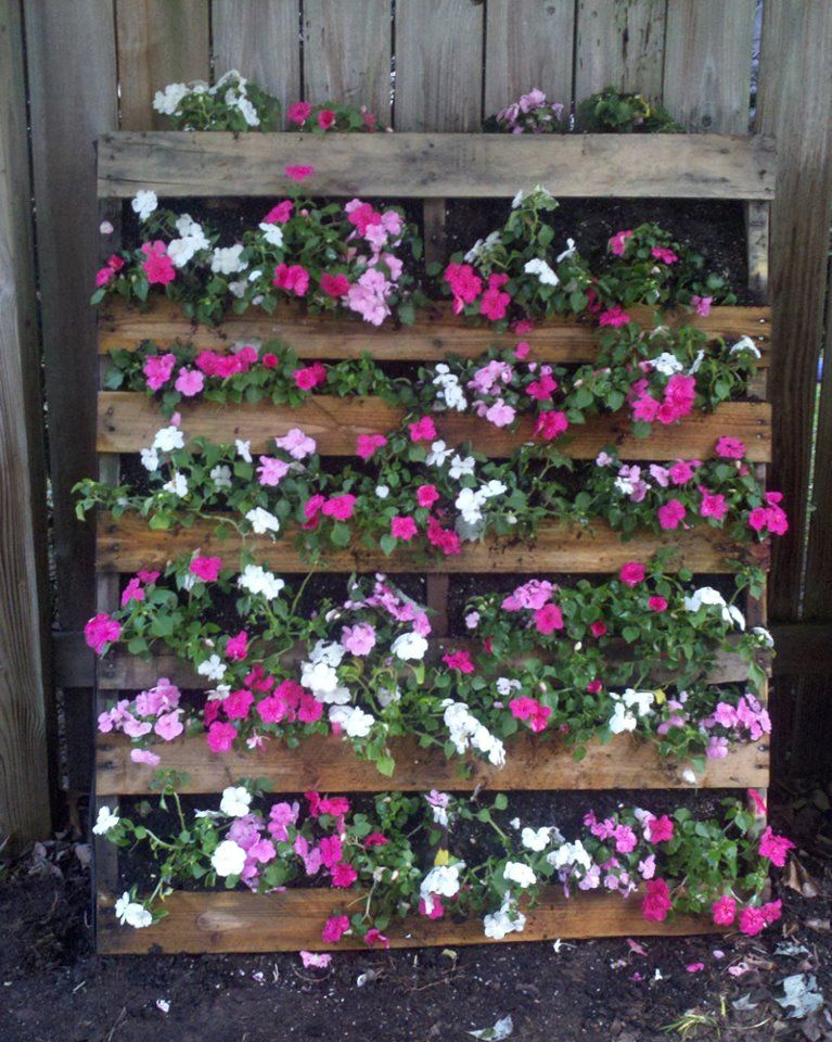 This is my pallet garden wall. Might also plant maybe ...