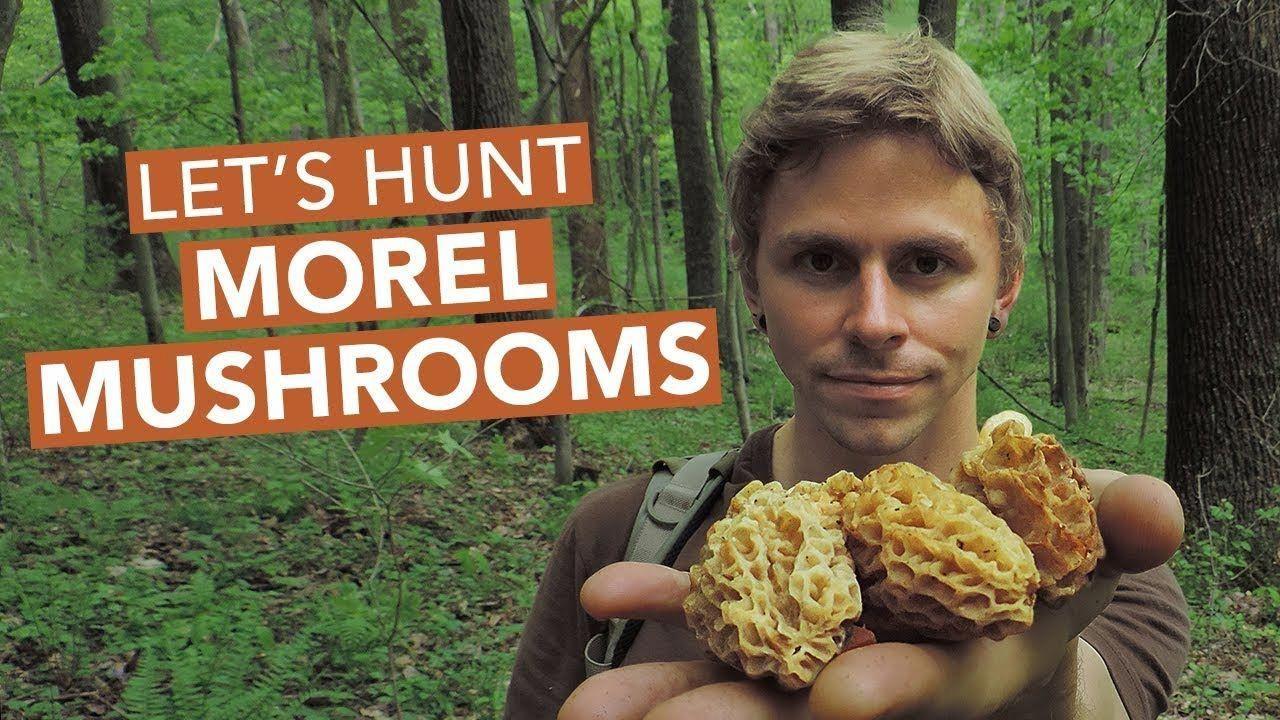 Lets hunt morel mushrooms youtube bushcraftforaging
