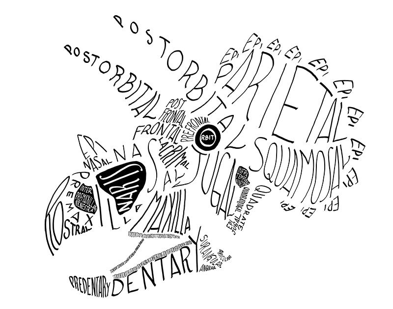 Calligraphy Of The Anatomical Names Of Bones In The Triceratops