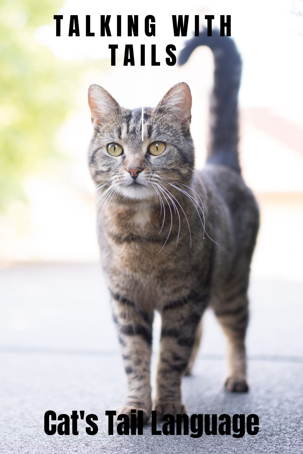 What Your Cat Is Telling With Their Tail Cats Cat Language Cat Tail Language