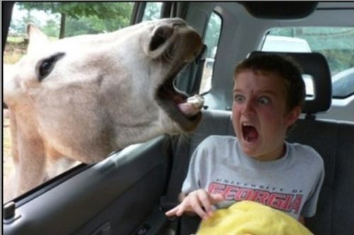 The Most WTF Pictures Of People Posing With Animals A Board - 49 hilarious pictures people animals