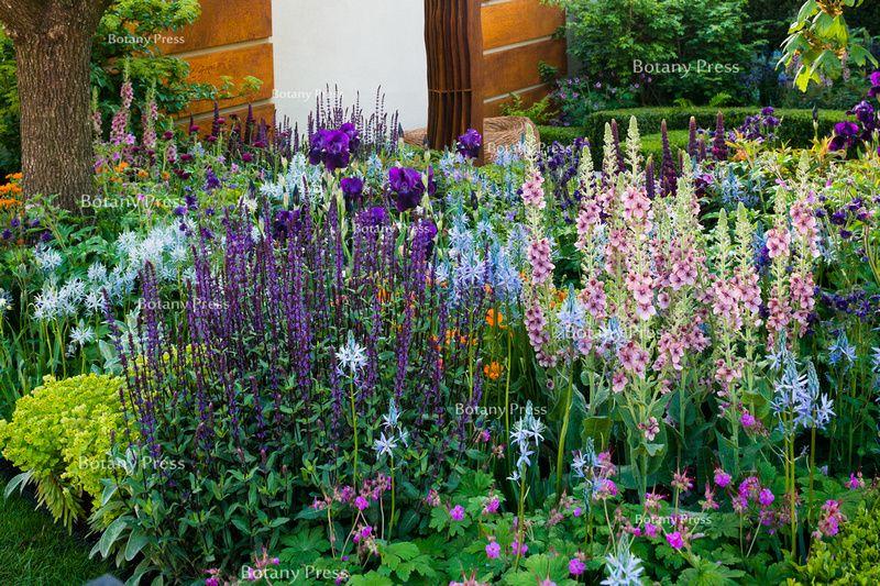 Salvia nemorosa 'Caradonna', Cirsium rivulare 'Atropurpureum', Camassia leichtlinii 'Blue Heaven', Iris 'Sable', Camassia leichtlinii suksdorfii 'Caerulea', Verbascum 'Merlin'