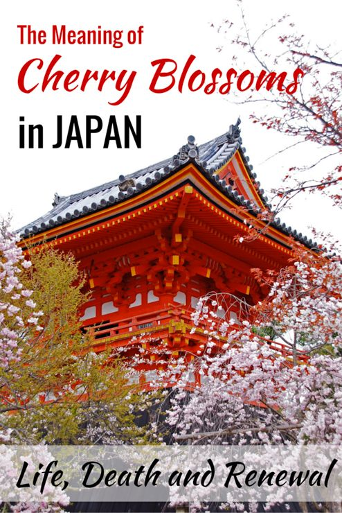 The Meaning Of Cherry Blossoms In Japan Life Death And Renewal Cherry Blossom Japan Cherry Blossom Meaning Japan