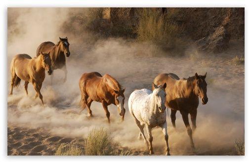 Wild Horse Herd Wallpaper Wild Horses Running Horse Wallpaper Horses