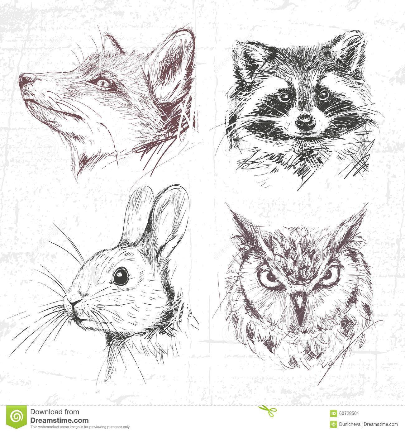 Fuchs Waschbar Hase Eule Zeichnung
