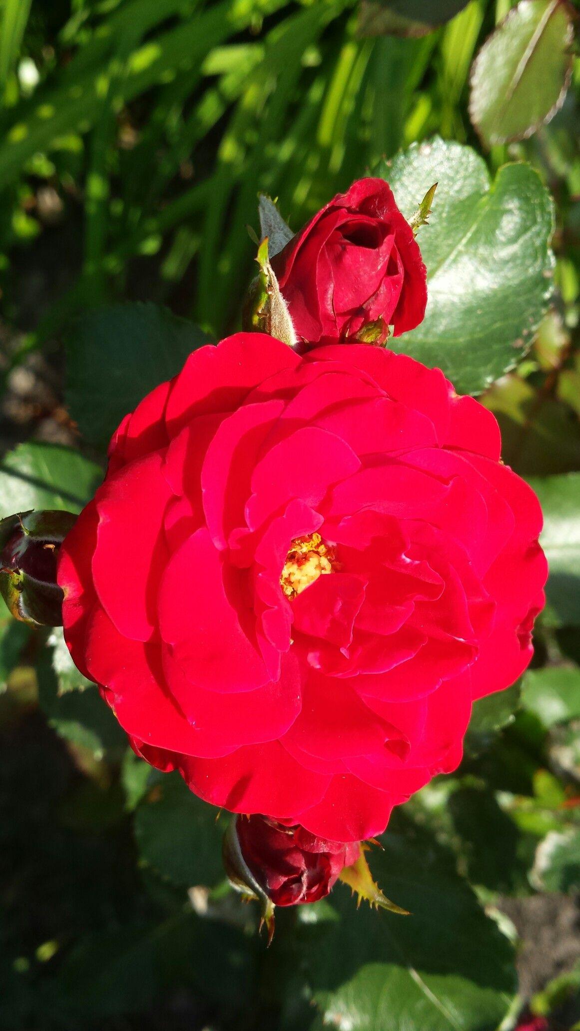 Pin By Lynne Shapiro On Flowers Wonderful Flowers Beautiful Flowers Pretty Flowers