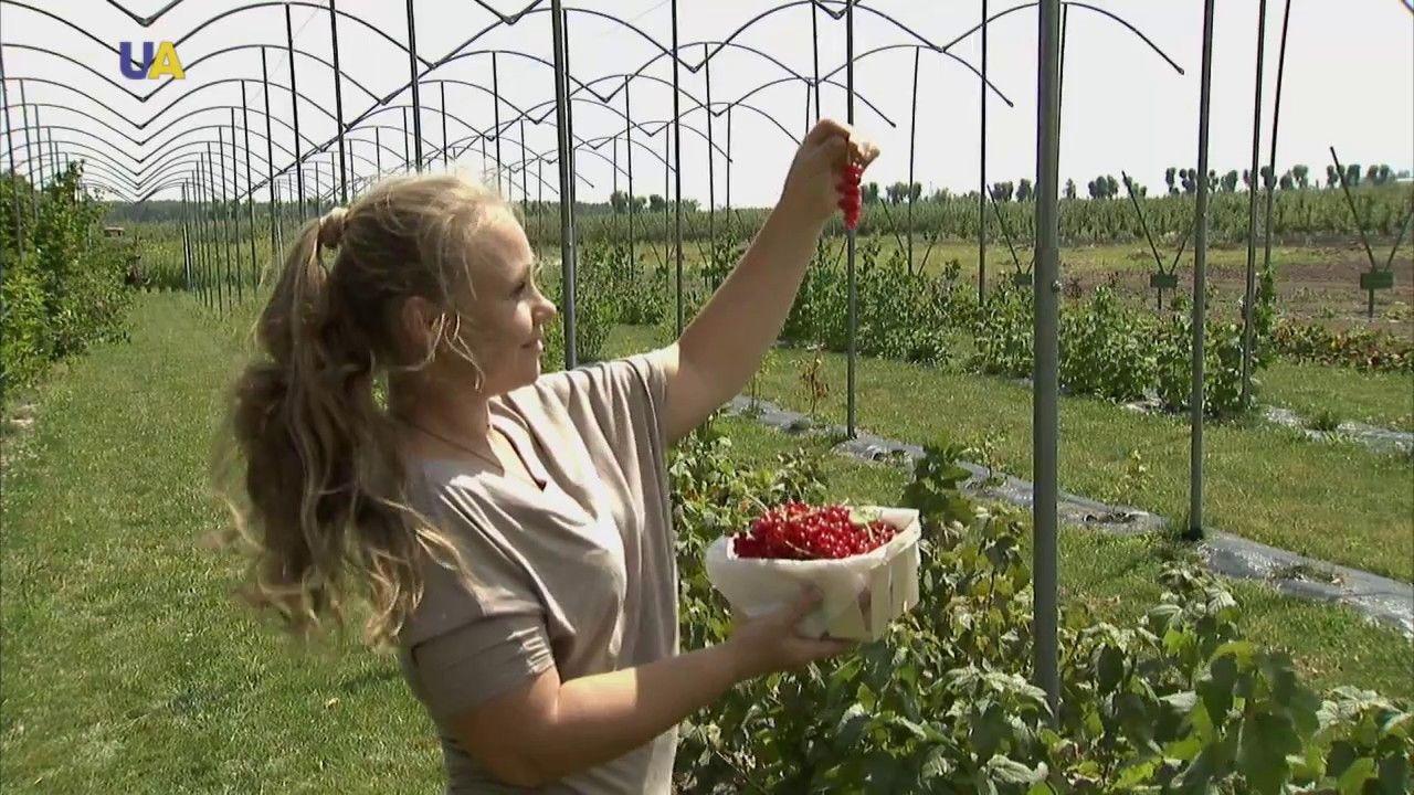أوكرانيا سلة أوروبية مليئة بالثمار الأرضية Plants
