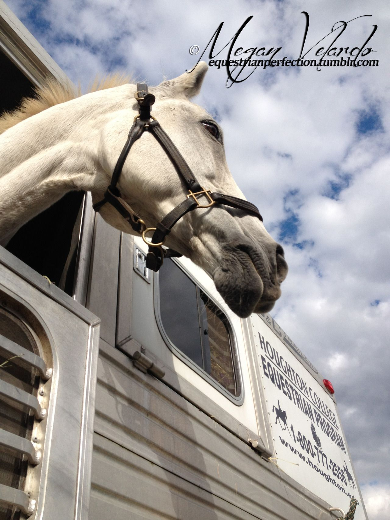 Equestrian Perfection: Photo