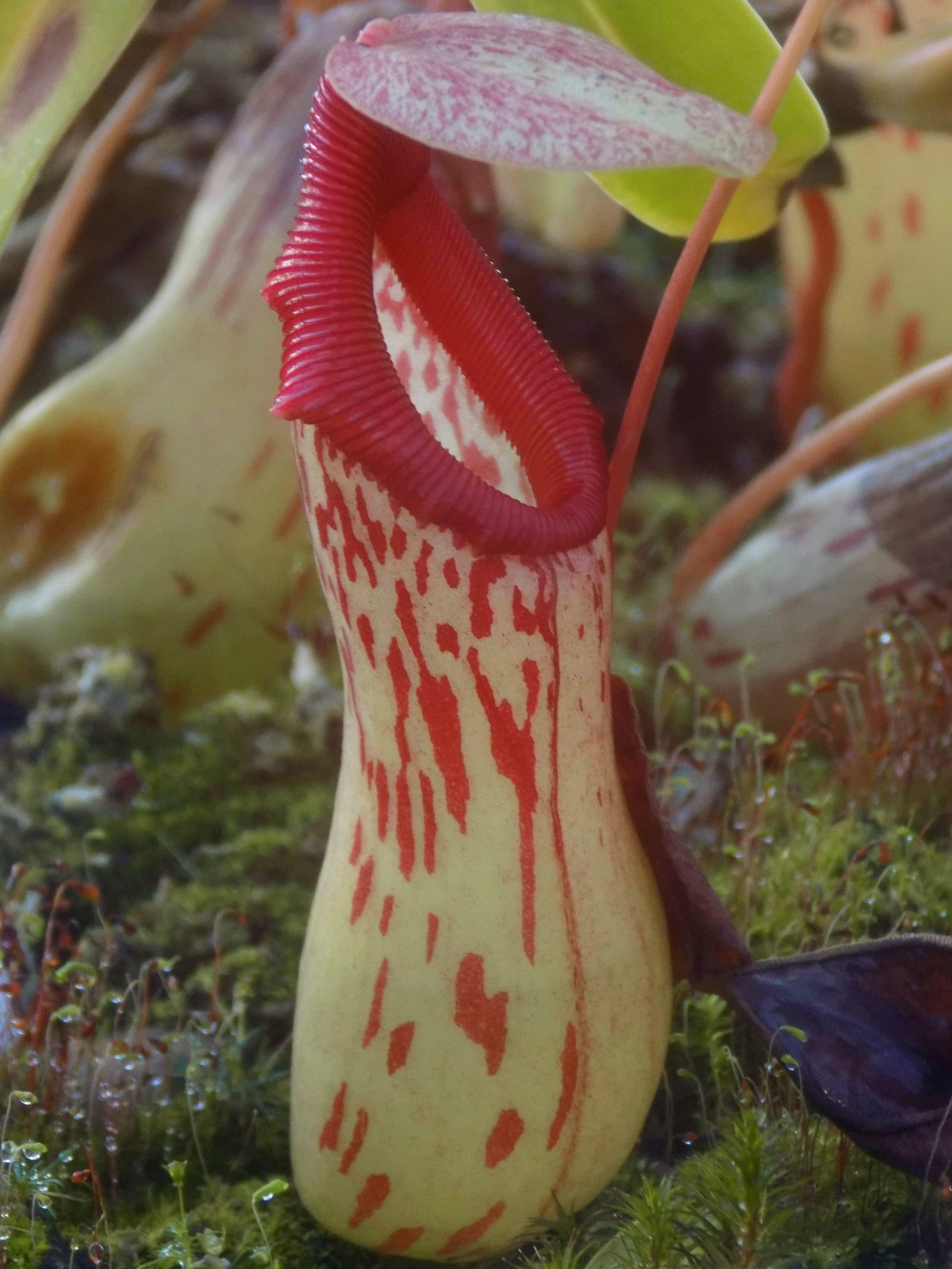 plante carnivore bordeaux