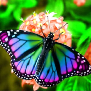 Real Life Butterfly Pictures Beautiful Butterfy Ima...