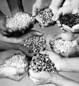 Muchas manos, diferentes aportes... en un mercado cooperativo y mediante una idea de marketing: El marketing cooperativo.