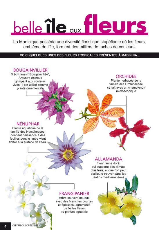 Martinique, île aux fleurs Quelques variétés de fleurs ...