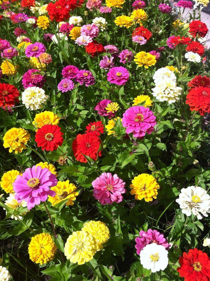 flower garden ideas pinterest