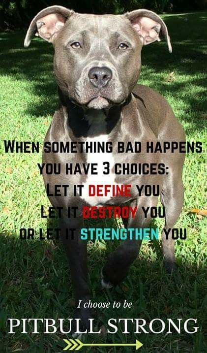 Pitbull strong
