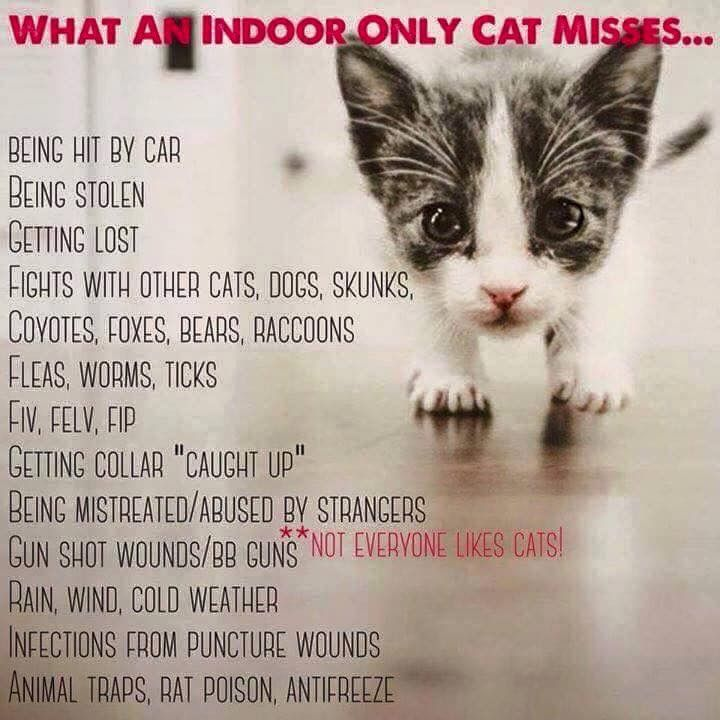 Pin by barbara on must love dogs cats indoor cat