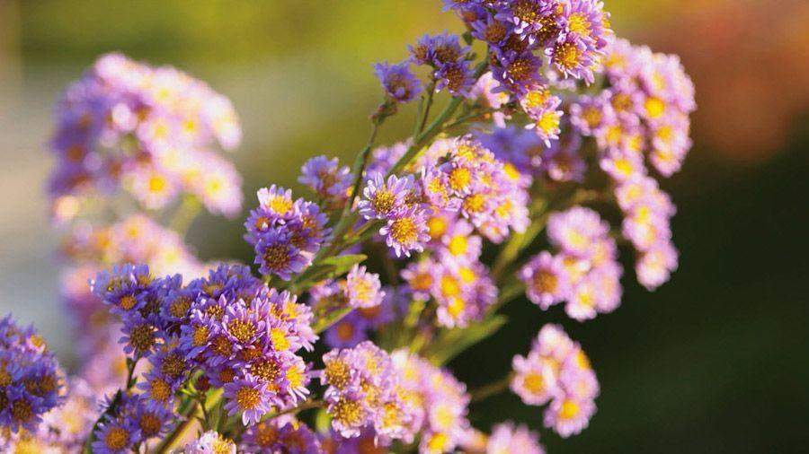 8 fallblooming native plants we love 1000 in 2020