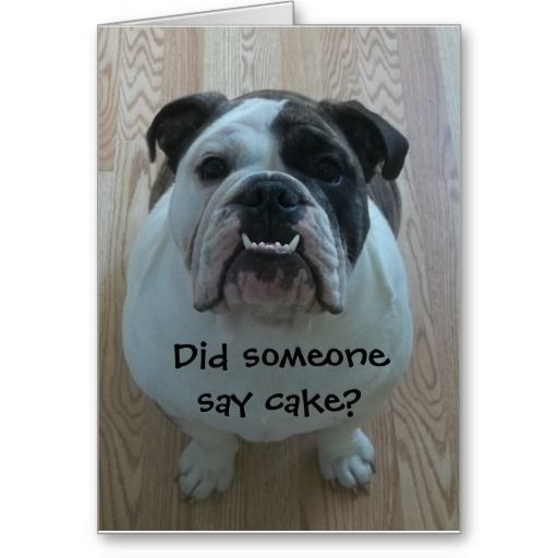 Funny English Bulldog Happy Birthday Card Zazzle Com Bulldog