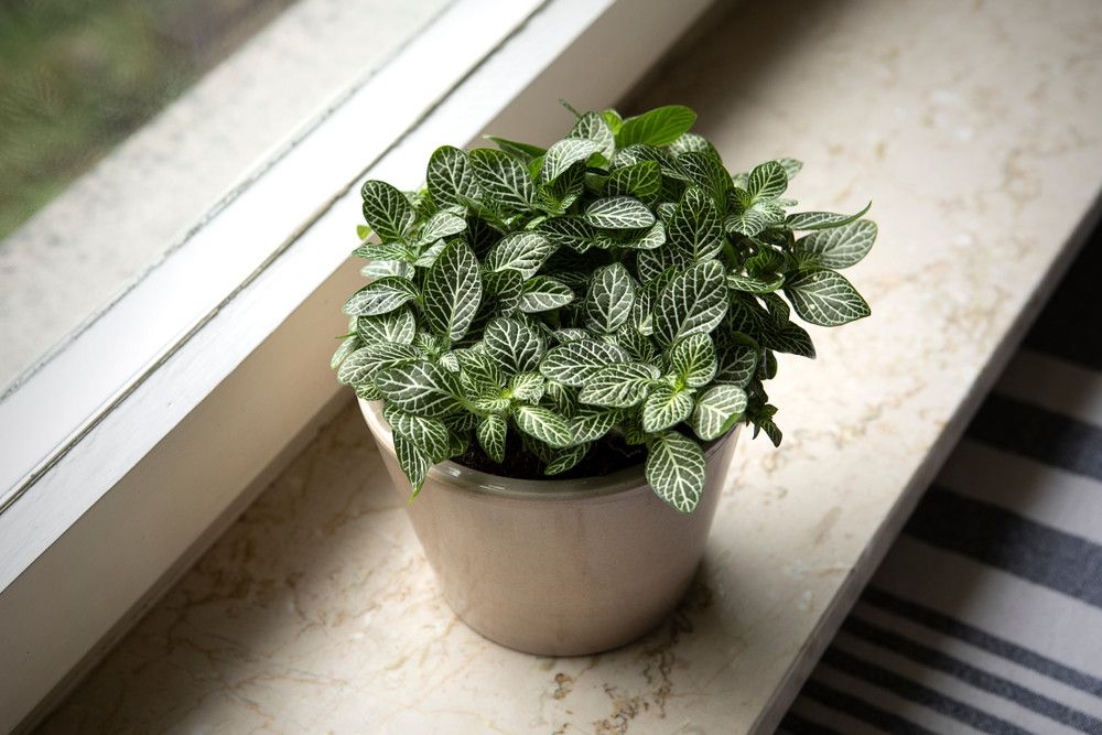 14 Houseplants That Thrive In Low Light in 2020 | Low ...