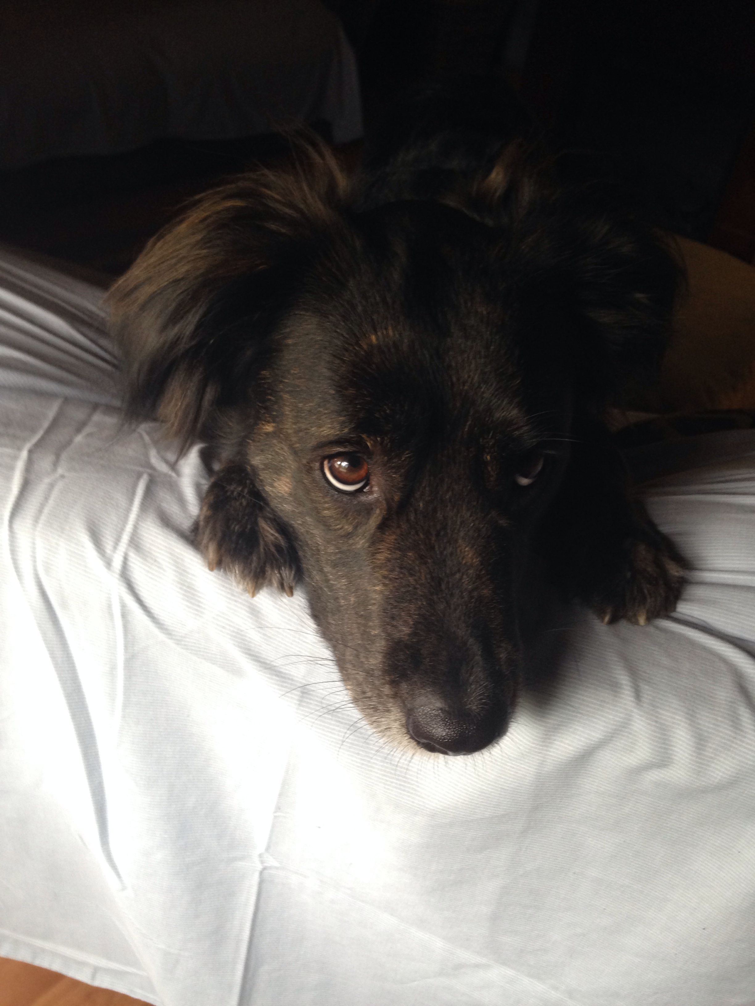 who's the best dog in the world??? maya my border collie