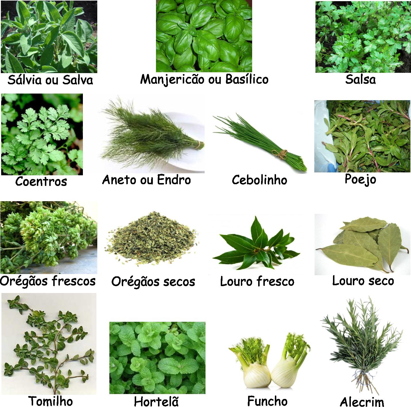 Ervas arom imagem png 1428 x 1414 pixeis for Asociacion de plantas aromaticas