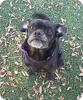 Pin by Lisa A on Adoptable Dogs | Black pug puppies, Pug puppies for
