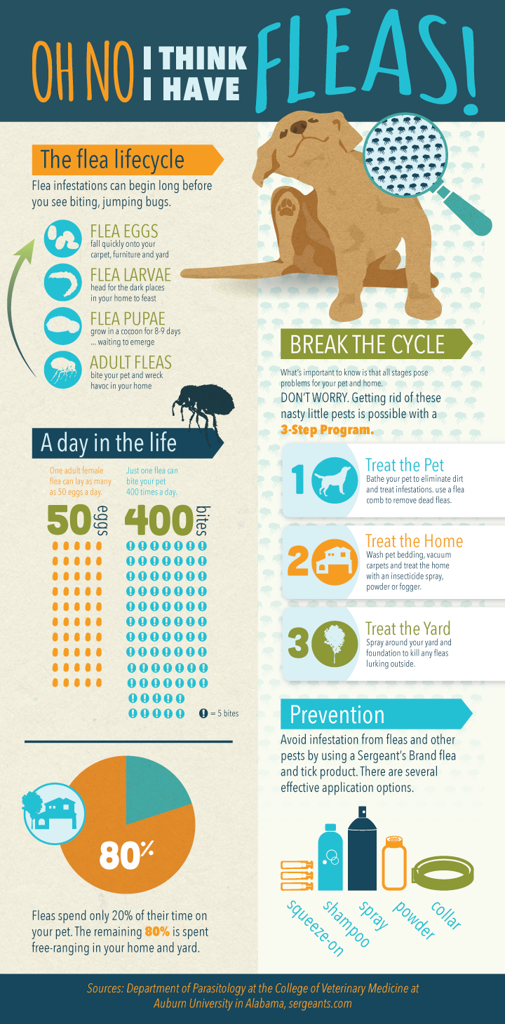 Infographic Facts About Fleas Ticks On Your Pet Pet Health Fleas Flea And Tick