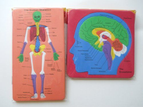 foam puzzles - the human skeleton or the encephalon (sold, Skeleton