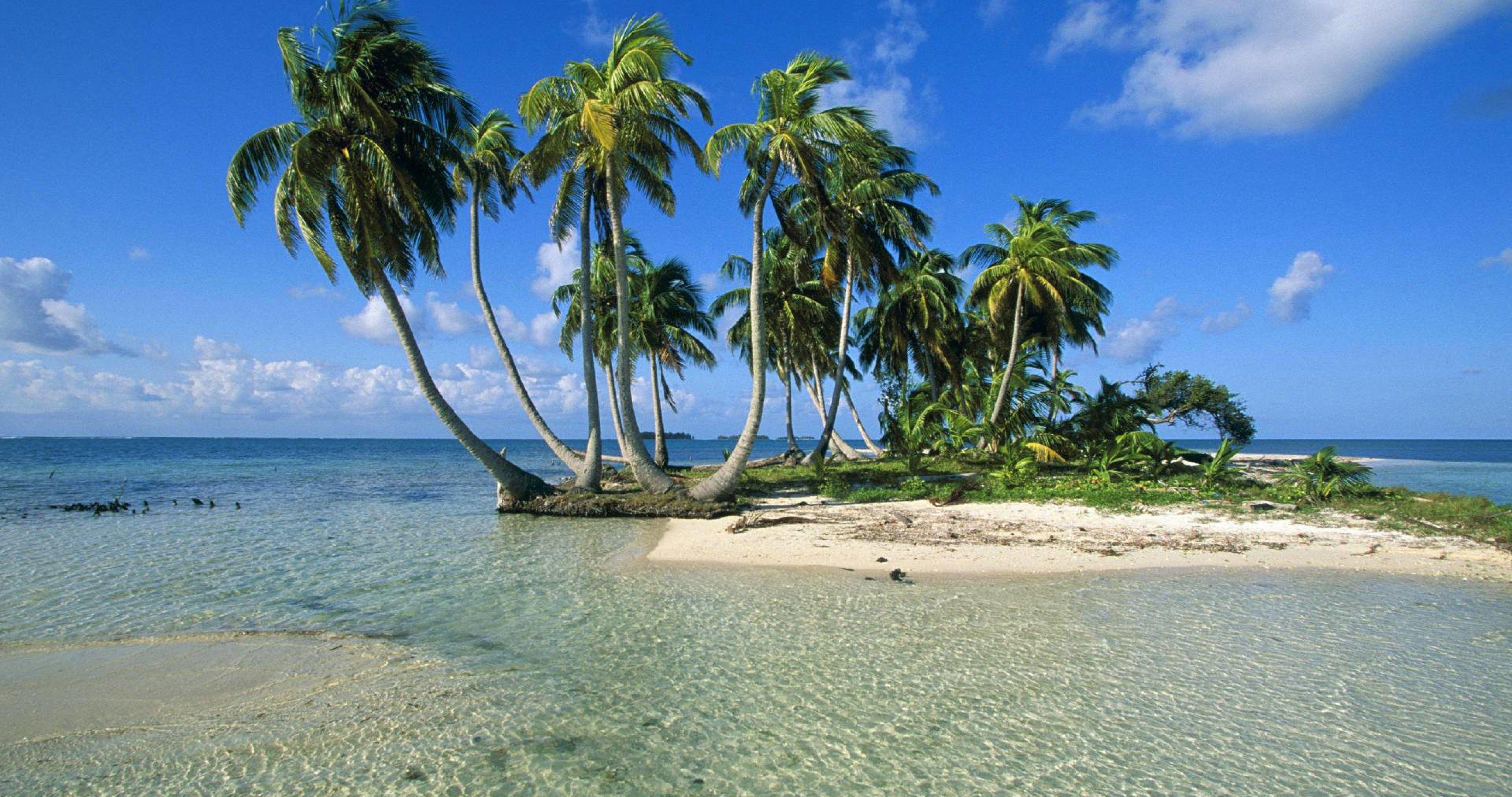 Island Palm Trees 4k Ultra Hd Wallpaper Nature Beach Palm Trees