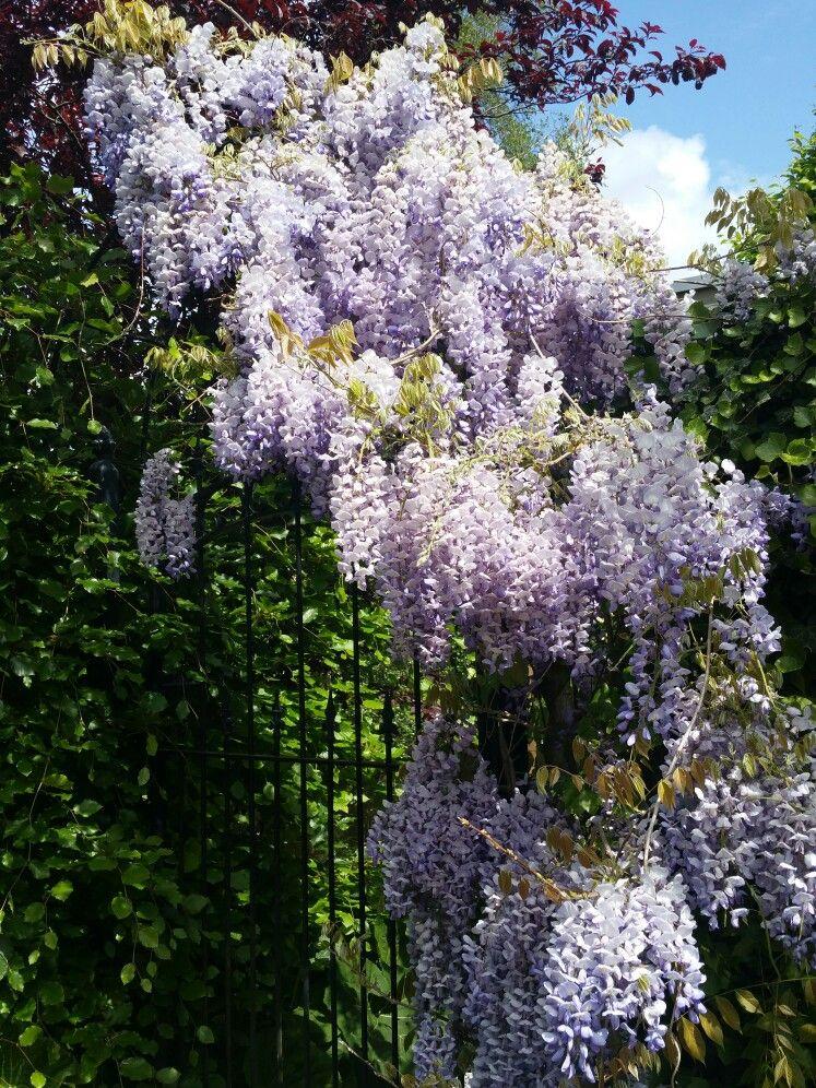 Dream garden entrance