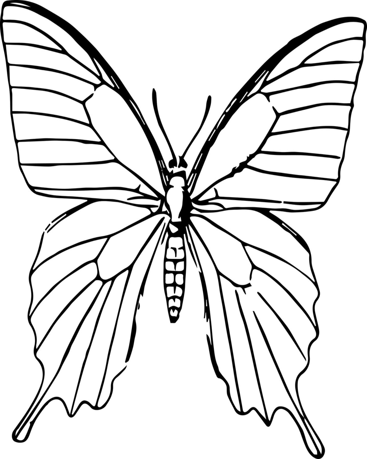 Free Printable Butterfly Coloring Page Butterfly Sketch Butterfly Pictures Butterfly Coloring Page