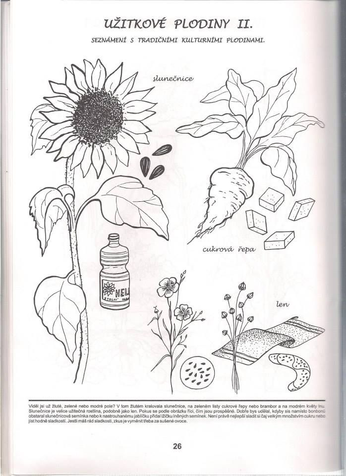 Uzitkove Plodiny Pracovni Listy Education Montessori A Autumn