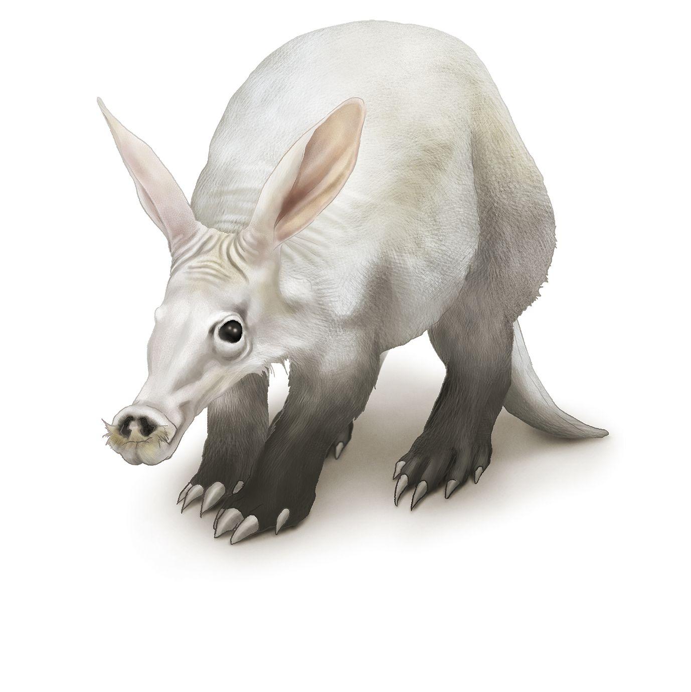 珍獣リアルイラスト:ツチブタ』 | リアル動物イラスト | pinterest