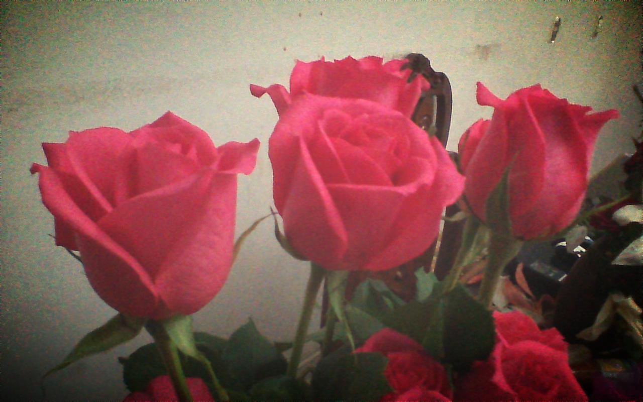 Rosas para las más bellas