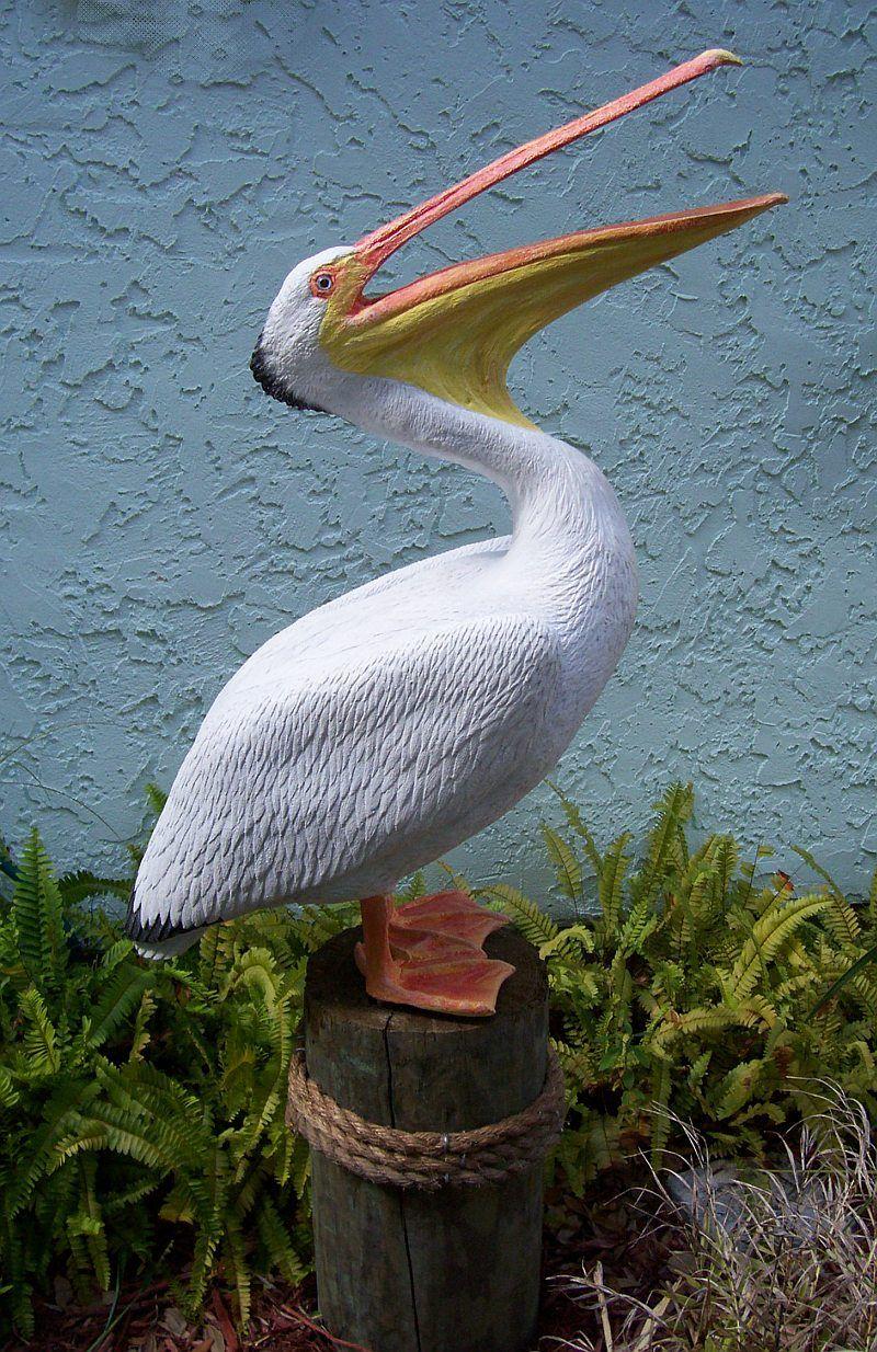 El pelicano pelicanos aves cisnes y animales - Fotos de pelicanos ...