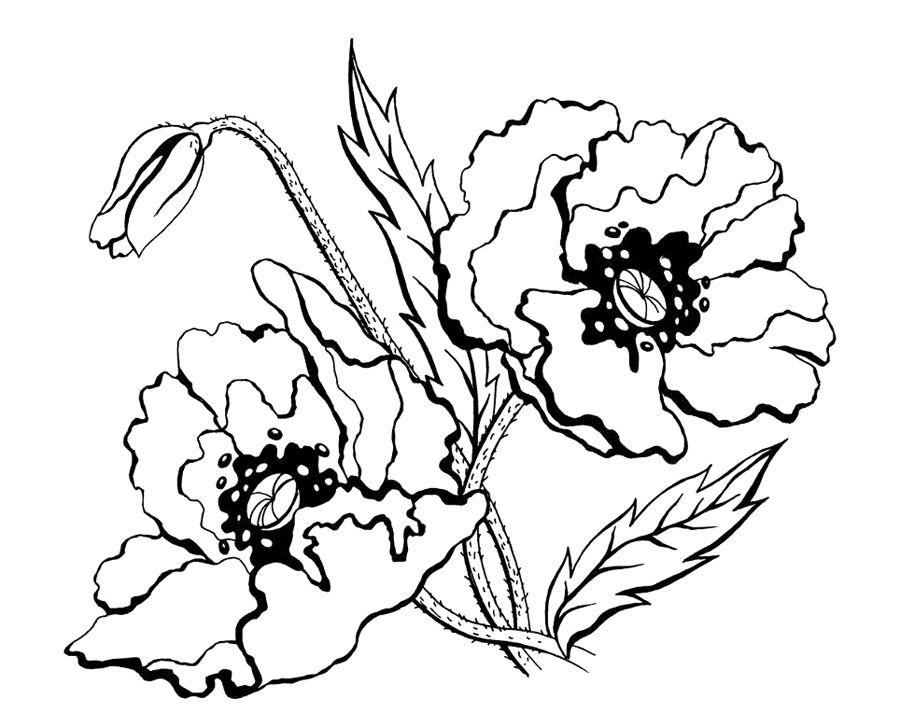 Цветок мак раскраска | Рисунки, Маки, Раскраски