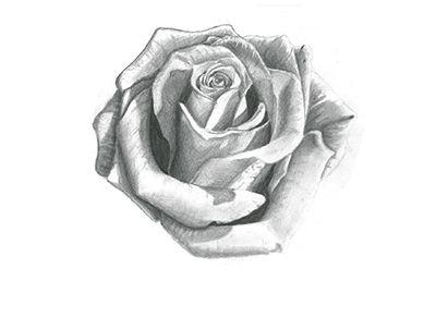 Encore Une Rose Plus En Plus Realiste Dessin En 2019 Pinterest