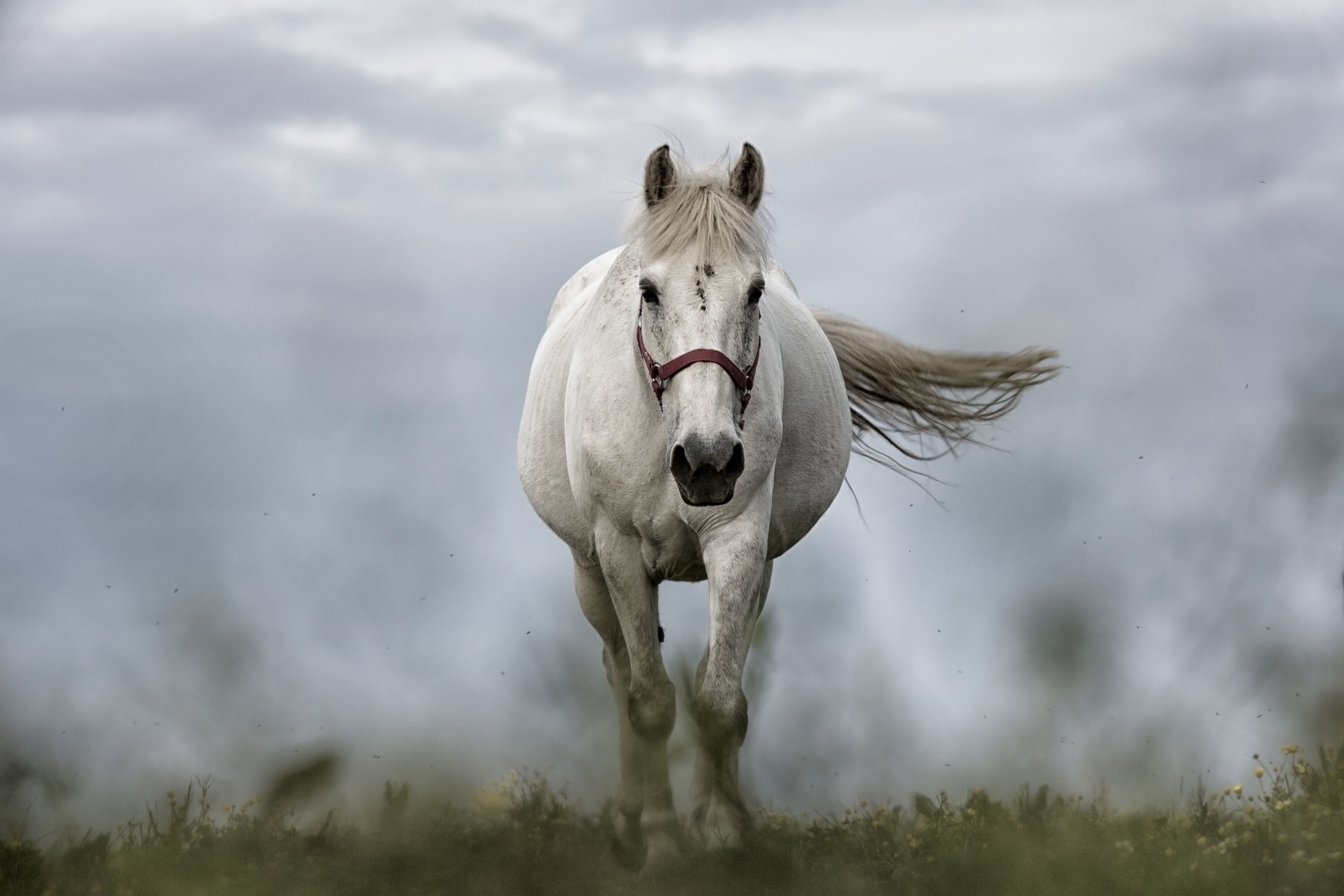 Horse Wallpaper Horse Images White Horse Front View Is Hd Wallpapers Backgrounds For Desktop Or Mobile Device To Find Horse Wallpaper Horses Free Horses