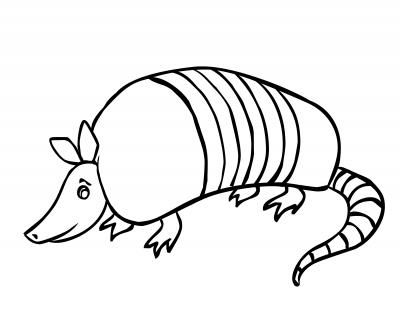 armadillo coloring page | armadillo model | Pinterest