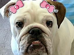 Fancy Paws Dog Boutique Dog Boutique Barkery San Antonio Tx