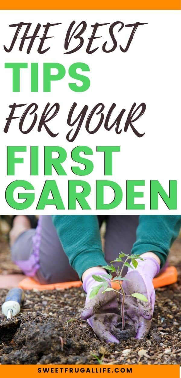 Best Garden Tips Gardening Tips For Beginners How To Start Your