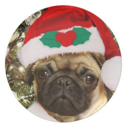 Christmas Pug Dog Plate Zazzle Com Pugs Christmas Puppy Pug Art